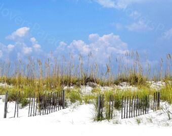 Florida Sand Dunes and Beach Fencing // Beach Photography // Pensacola Beach Sea Oats Print