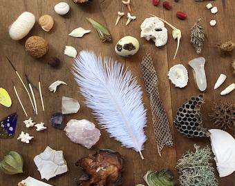 20 Item Nature Curiosity Collection Grab Bag