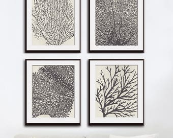 Underwater Sea Coral Collection (Series C) Set of 4 - Art Prints (Featured in Charcoal on Stone Wash)