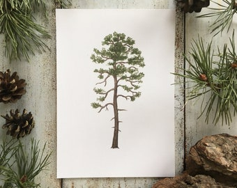 Scots Pine - Print A5
