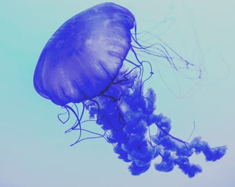 Jelly Fish Print, Ocean life print, conceptual photography