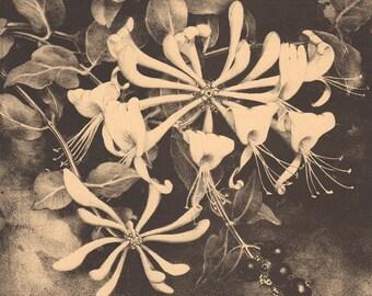 Original lithograph by Jan Voerman jr
