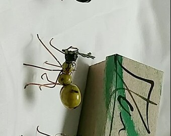 Ant Family of 5
