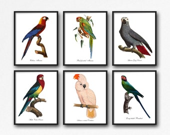 Bird Print Set Parrots, Parrot Botanical Print Set, Home Decor, Vintage Parrot Illustrations, Parrot Reproduction, Parrot 6 Print Set GR006