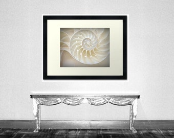 Ocean Dreaming - Nautilus Shell Sea Shell Ocean is calling Beach bum Beach house decoration Original Fine Art Print 8x10