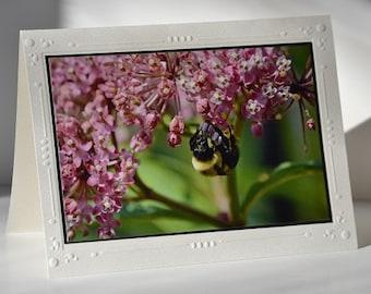 5 x 7 Photo Card.  Matte finished photo of Bumblebee hanging on Pink Milkweed Blossom, mounted on White Embossed photo card.  Acid Free