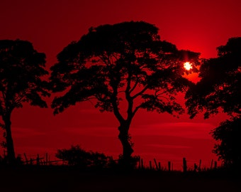 Crimson Moon, nature, silhouette, fine art photography, red, wall art