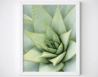 Succulent Print, Succulent Photography, Succulent Poster, Cactus Print, Cactus Wall Art, Botanical Print, Plant Print, Tropical Prints