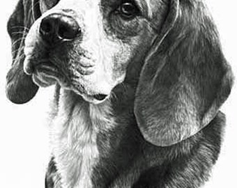 Beagle,Fine Art Print by Mike Sibley