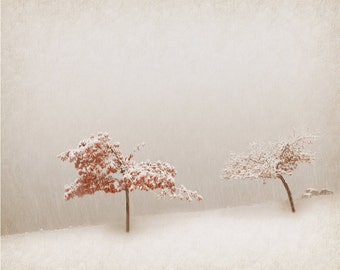 Snow  Fine Art Photography Snow Art Winter Archival Photography