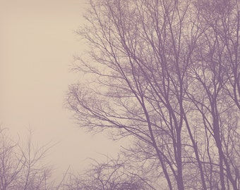 Leafless Tree Color Photo Print { brown, branches, winter, tree, clouds, sky, gloomy, hazy, wall art, macro, nature & fine art photography }