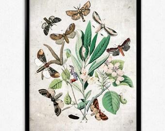 Butterflies Garden Vintage Print 1 - Butterflies Poster - Butterfly Art - Butterfly Picture - Home Decor - Home Art - Kitchen - Kitchen Art