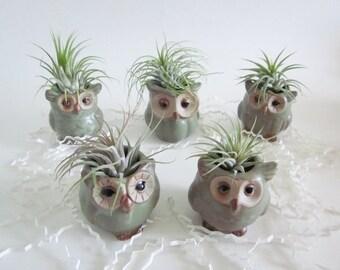 Owl planter, Ring dish, jewelry holder, Cubicle decor, ring holder, air planter, Desk decor
