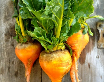 Golden Beets Rare Seeds Best Seller Grown To Organic Standards