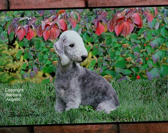 Bedlington Terrier Doormat, Bedlington Terrier Gift, Bedlington Terrier Floor Mat, Bedlington Terrier Art, Bedlington Terrier