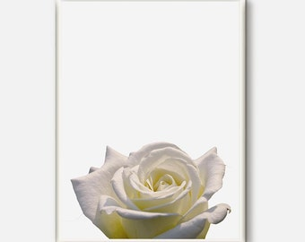 Flower Artwork, Flower Photo, Flower Art, Flower Print, Botanical Photography, Flower Photo, Botanical Decor, White Flower Prints, Rose Art
