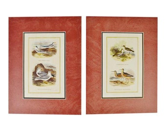 Pair of Nicely Matted Exotic Bird Prints
