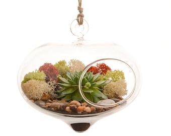 Curvy Hanging Succulent Moss Terrarium Kit / DIY Succulent Terrarium