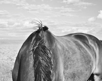 Modern Horse Photography, Western Art, Black and White, Physical Print