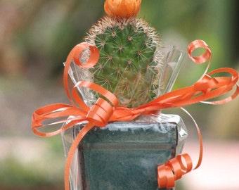 Cute Little Cactus Gift Plant
