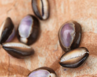 Purple Top Cowry Cowrie Shells- brown cowry- 20 pieces