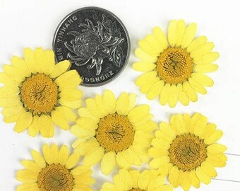 Dried Natural Pressed Flowers for Crafting - chrysanthemums