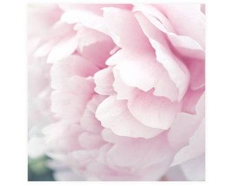 Pink Peony Flower Photography Print