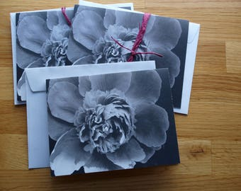Black and White Peony - Photo Notecard - Free Shipping