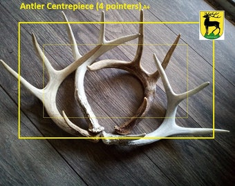 Antler Centerpiece (100% real antlers) Shipping Promos!!