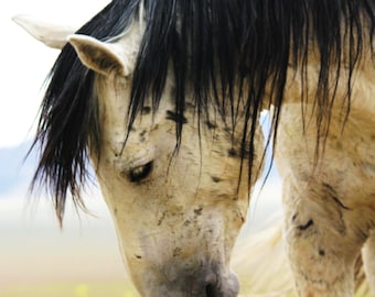 Grace- Wild Mustang Photography
