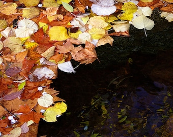 Fallen leaves on a lake. Great for home decor, office, workroom, child's room, etc.