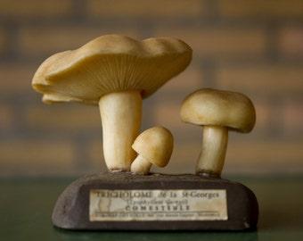 Mushroom Lyophyllum Georgii Calocybe gambosa Made of Naturel Latex