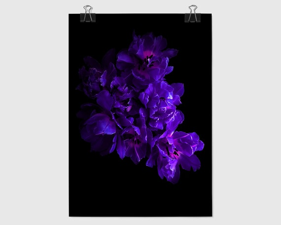 Gorgeous Purple and Black Tulip Photo (Purple Art) for Instant Download to Update or Decorate your Office or Home Décor