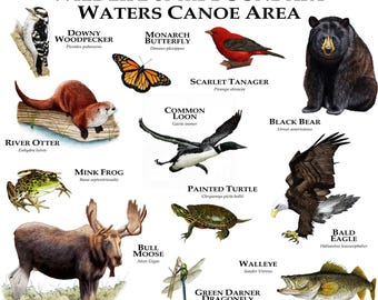 Wildlife of the Boundary Waters Canoe Area