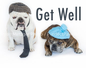 Get Well English Bulldog Card, Fine Art Photography Print, Purrfect Pawtrait Pet Photography, Animal Photography