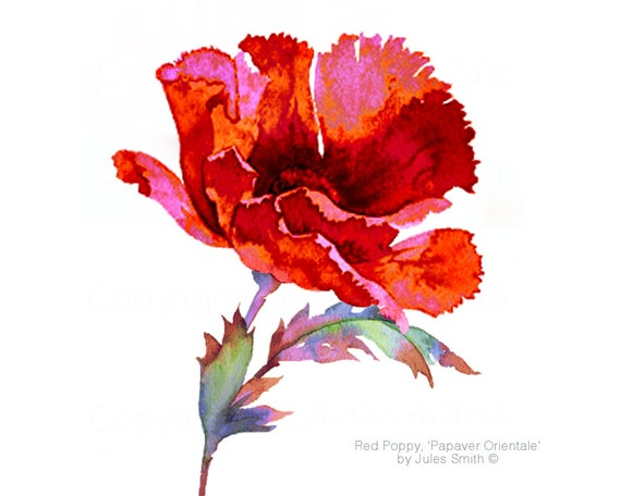 Watercolour flower painting red poppy original handmade limited edition wall art flower print watercolour red poppy painting home decor