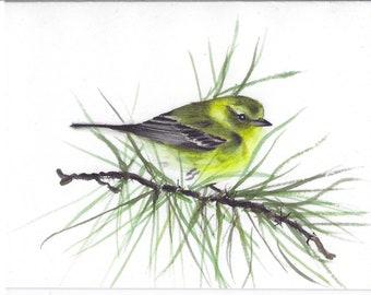 Pine warbler, print, note card