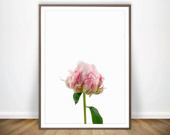 Pink Peony Print * Peony Wall Art Flower Print Peony Art Living Room Prints Flower Wall Art Flower Art Nature Photography Nature Prints
