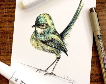Pen & Ink Original Drawing - Green Wren