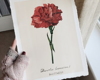 Carnation Flower Illustration. Sagittarius Zodiac Sign. Original Watercolor Painting. Original Illustration. Flower Painting. Artwork