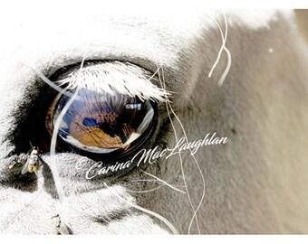 Seall sin / Regarde ca /  Look at this - -Equine Fine Art Horse Photography - Cheval Etalon Photographie d'Art