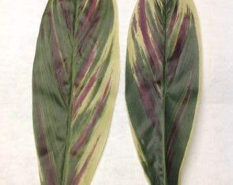 SILK FABRIC Ti leaf. For Polynesian Costumes. Perfect Pieces For Making Your Own Creations, Costumes, Hip Hei, Hair Pieces. 12 Leaves.