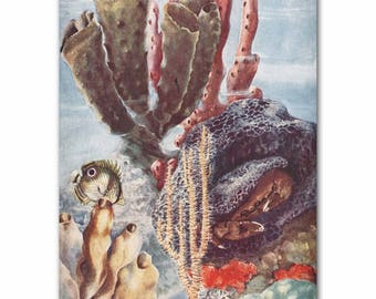 "Underwater Art, Vintage Seaweed Print, 1930s Ocean Pictures --- ""Tropical Sea Sponges""  No. 316"