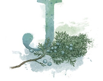 "Letter J- Juniper, Nature Alphabet Art 8.5"" x 11"" Print Initial Nursery Home Decor"