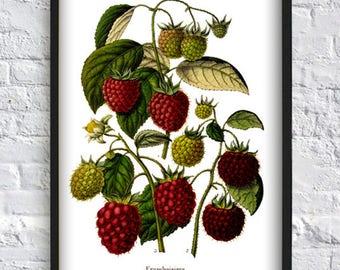 Raspberries print berry print berries print poster wall art kitchen decor vintage illustration
