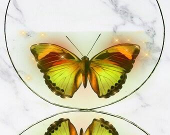 Golden Glowing Butterfly Hoop Earrings, Transparent Floating Image, Flying Inside, Medium Silver Hoops, Fantasy Garden, Butterfly Gift