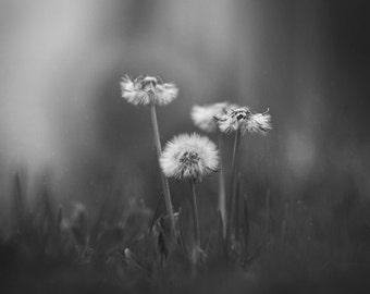 Black and White Dandelion Photo Print - Wishing Flower Wall Art - Nature Macro Photography - Nature Decoration - Dandelion Wall Decoration