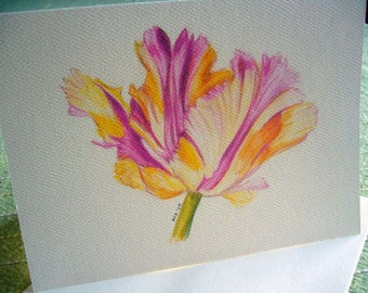 Parrot Tulips  Notecards Set of 6