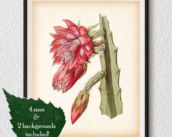 Instant download printable art, Botanical print, Orchid cactus, Cactus art, Antique prints, Vintage floral prints, Cactus print, Floral, #9