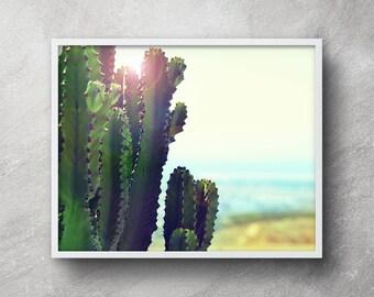 Cactus photography, Digital download, Cactus printable art, Cactus poster, Cactus wall art, Cactus art, Wall art, Desert photography